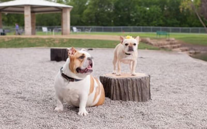 All About Play - playgroundpros - Site Amenities - Top Section - Dog On it Parks Photo 2